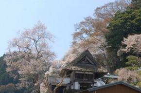 奈良県御杖村 安能寺の桜
